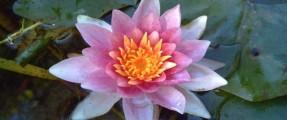 G-Tec Flower2 068